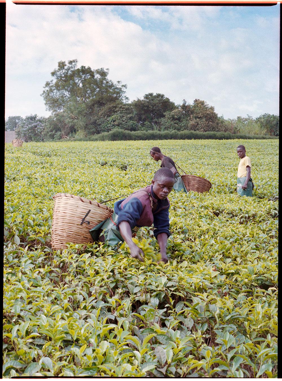 Uganda_MF_-(9).jpg