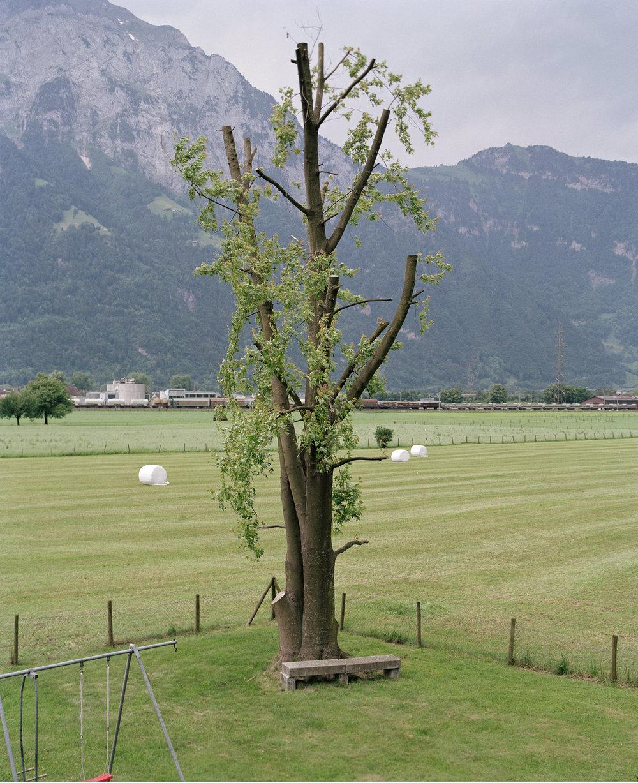 Baum / Kanton Uri