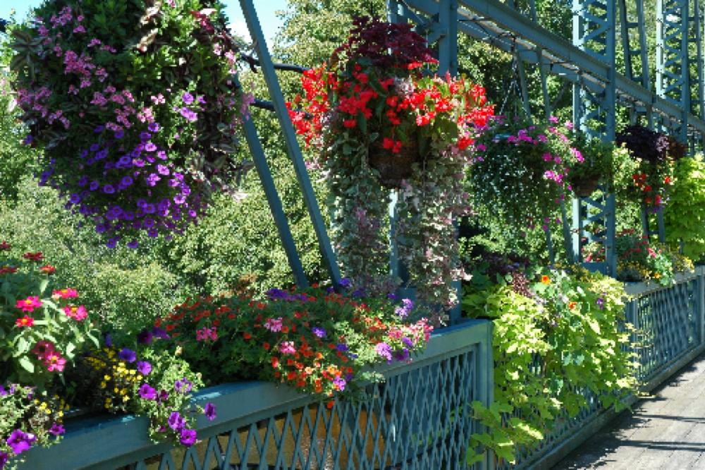 floral bridge, simsbury.png