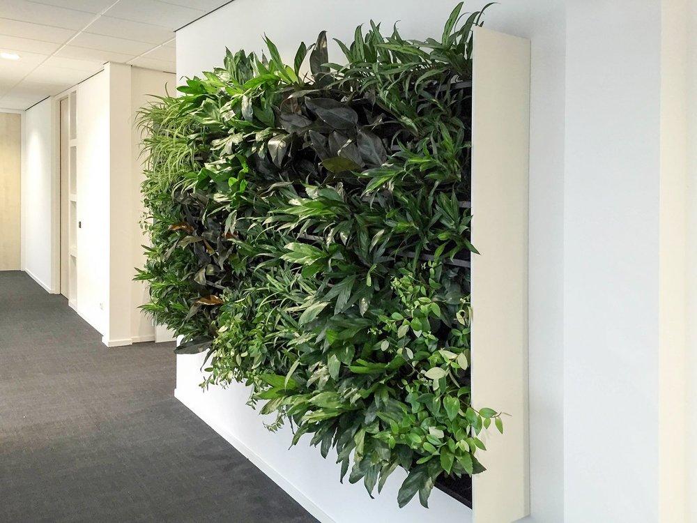 nextgen_-_living-wall-17.jpeg