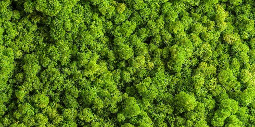"""ZELENÉ STENY - """"živé a zdravé prostredie prostredie a kúsok prírody bližšie k vám…"""""""