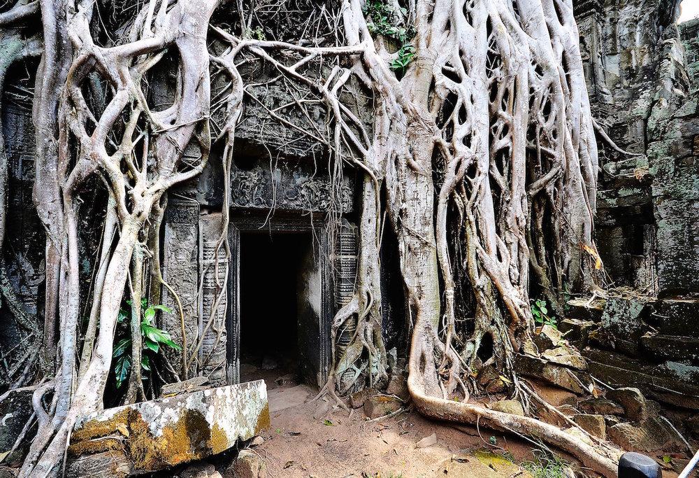 Tree roots growing around a doorway