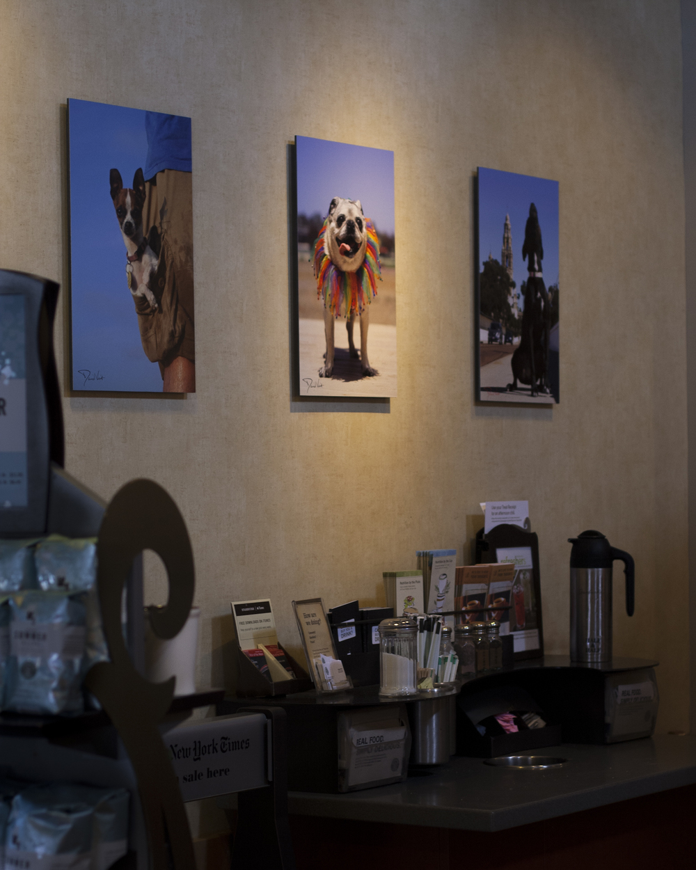 Starbucks Pet Photography