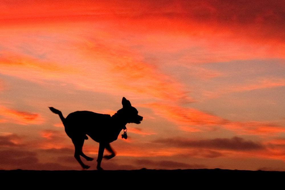 Sunset Silhouette iv