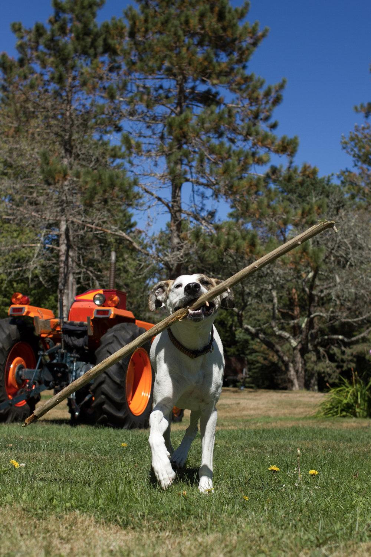 Cobb's Stick