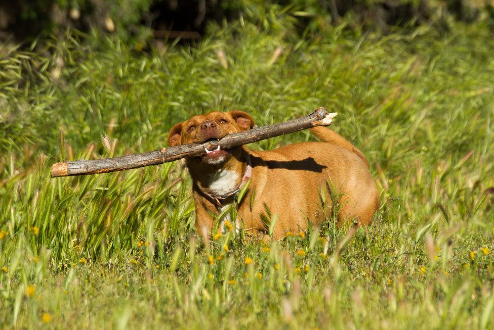 THIS Stick?