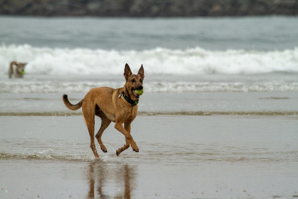 Fetch! It's Cold