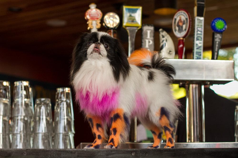 Doggie in Drag