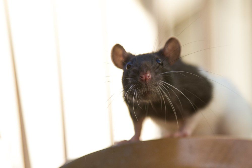 """Stinky Sneezy Ratatouille"""