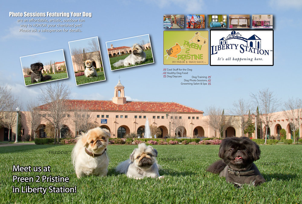 Pekingese Dogs at Liberty Station.jpg