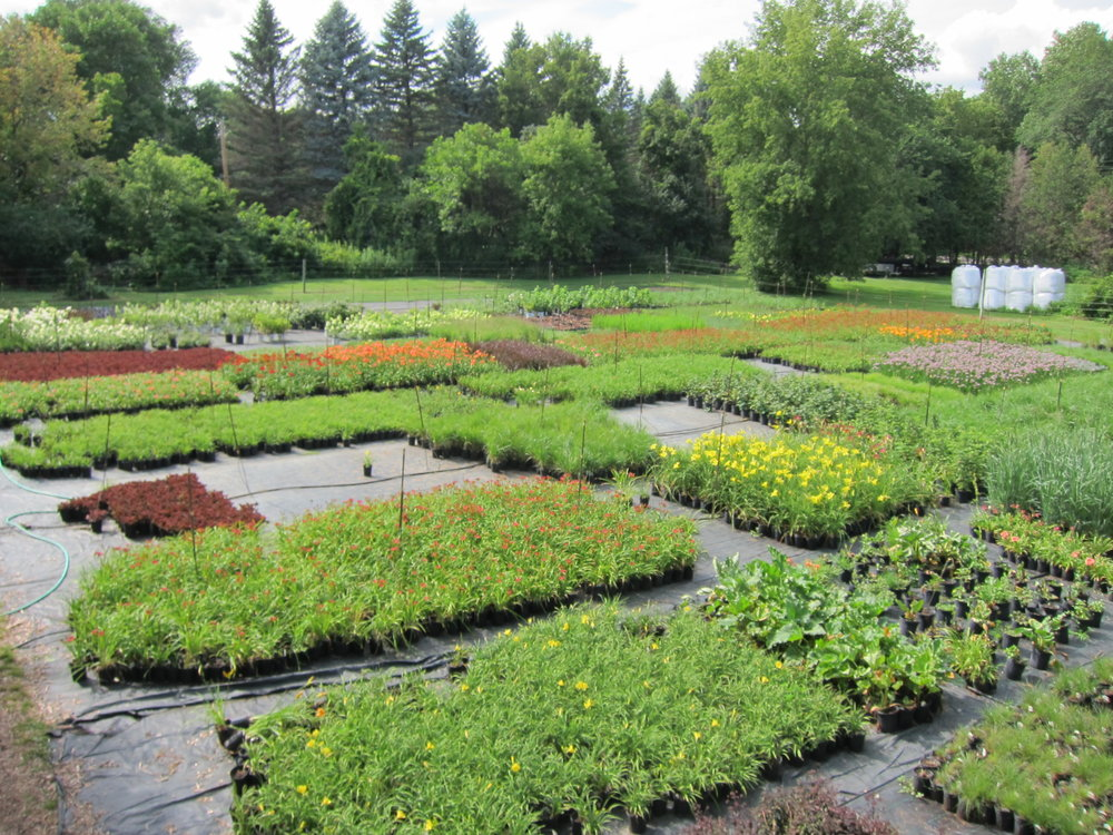 Birds eye view of our lower growing range