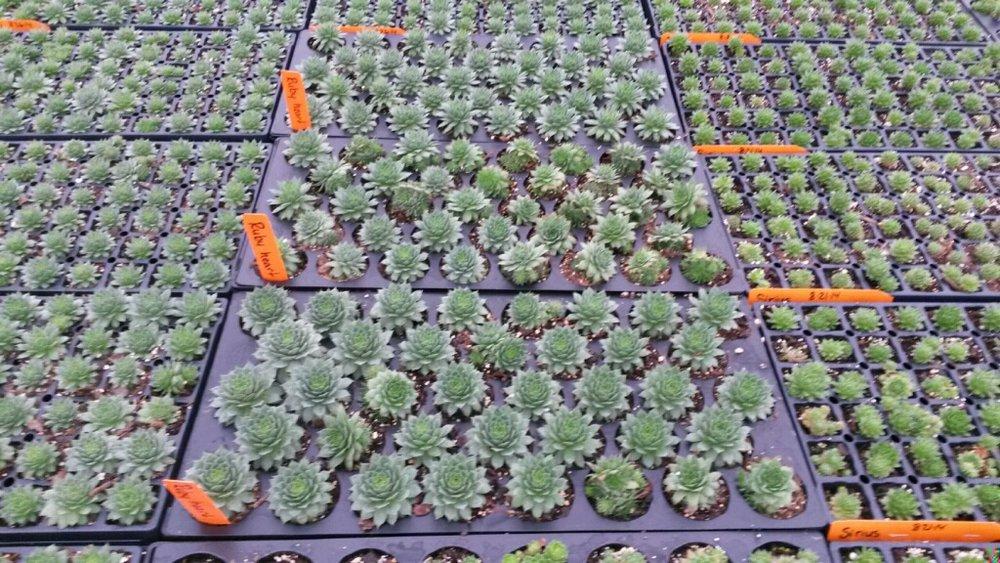 Baby succulents!