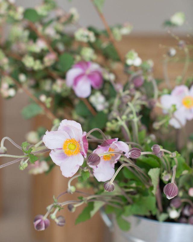 Happy Monday!! Loving these elegant Japanese anemone~ Flower world is always full of surprises!! . . . #flowerlove #anemone #japaneseanemone #purpleflower #floralart #art #floraldesign #mondaymood #elegantflowers #instaflower #weddingflorals #bayarealife #weddingflorist