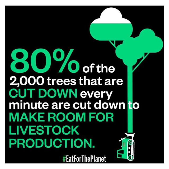 🤦🏻‍♀️ Just a reminder #thereisnoplanetb 🌲. . #cultivate.la #vegan #plantbased #compassion #trees #love #vegansofig #eatlikeyougiveafuck #cultivate
