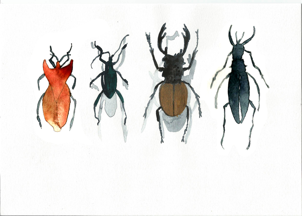 JANE_NEWLAND_BUGS_WATERCOLOUR.jpg