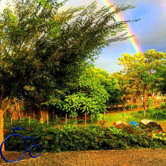 Now Serving: Pots of Gold. This morning's view from inside the cart. #rainbow #cartabuena #rinconpr #lamafiapr #localonly787 #dostazaspr