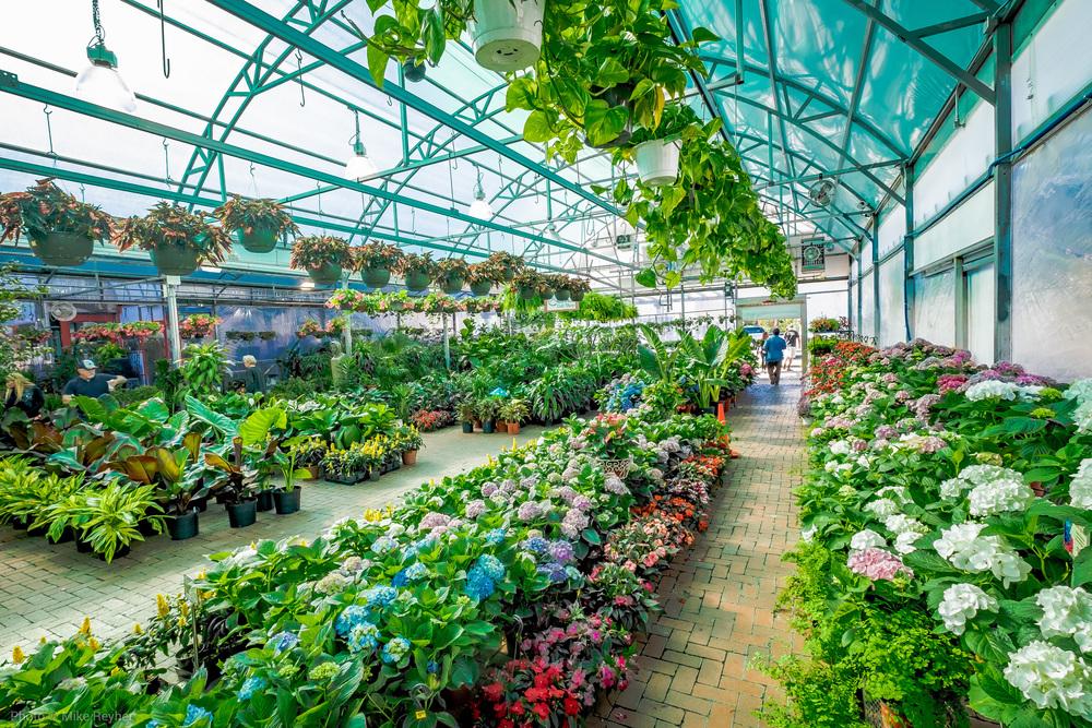 Ruibals Greenhouse Perspective
