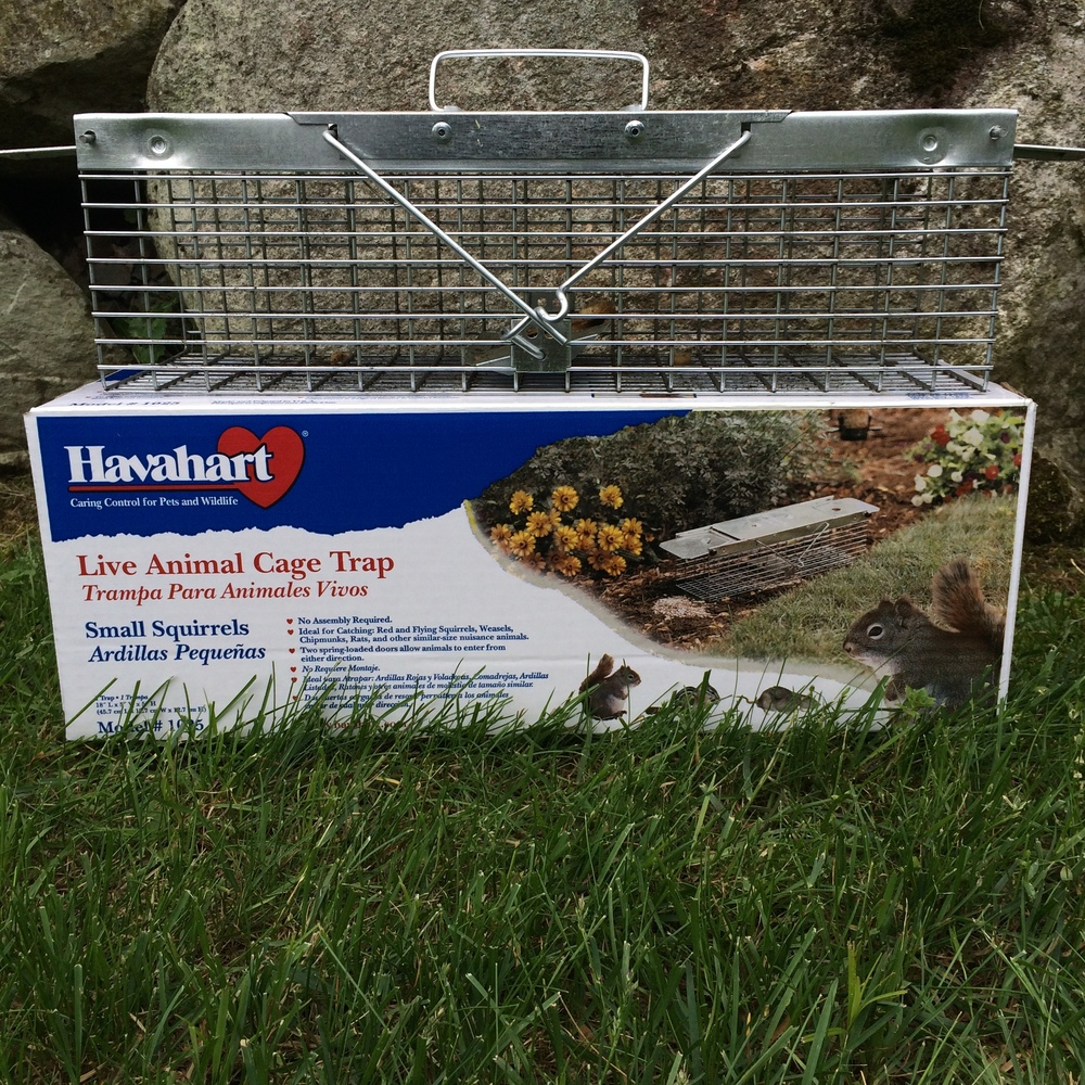 Havahart trap locked loaded and ready to go into my garden!