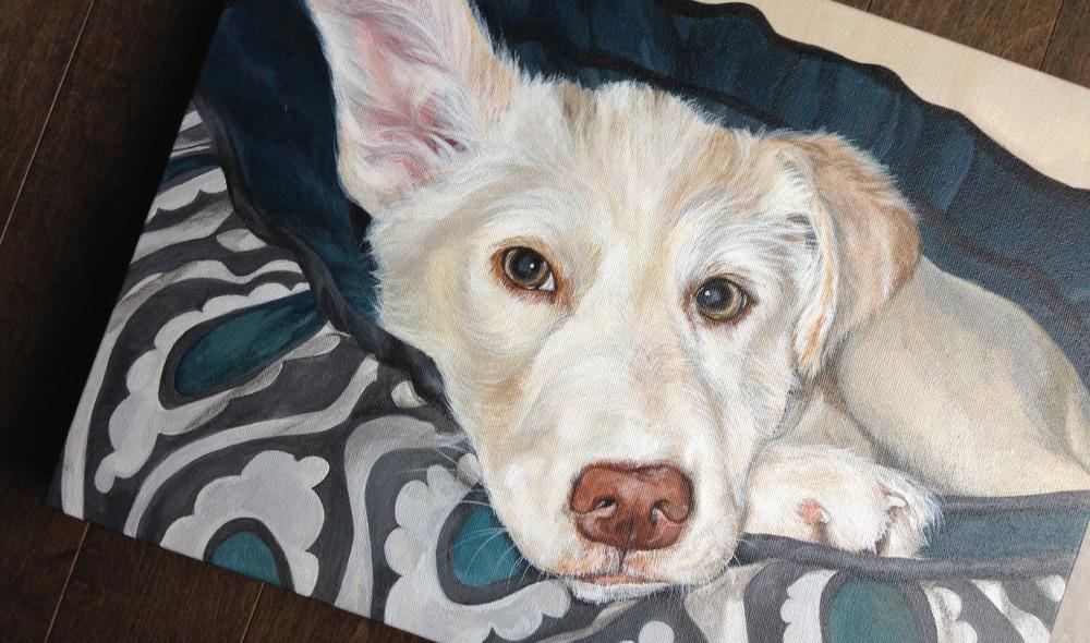 Husky/Border Collie mix portrait.