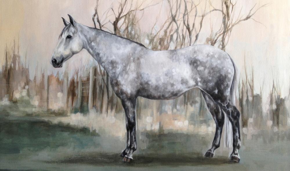 Dappled grey, full body horse portrait.