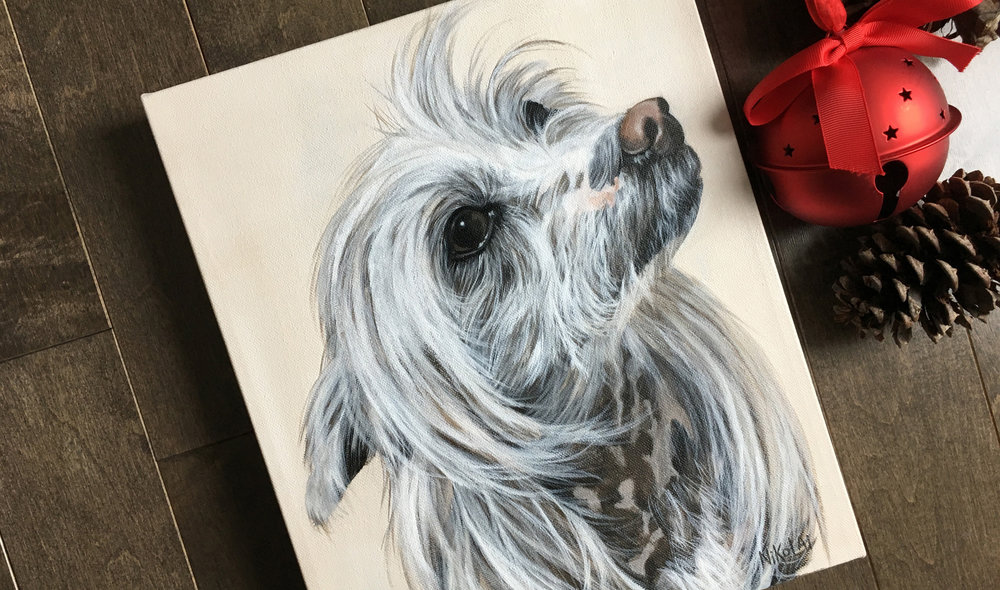 Squeaky – Chinese Crested