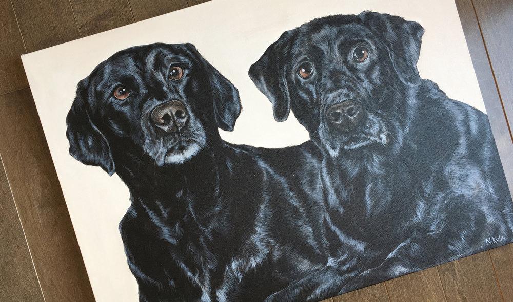 Raven and Elle (Black Labrador Retrievers)