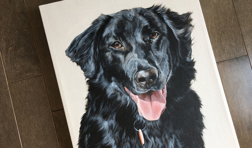 Rudy (English Shepherd)