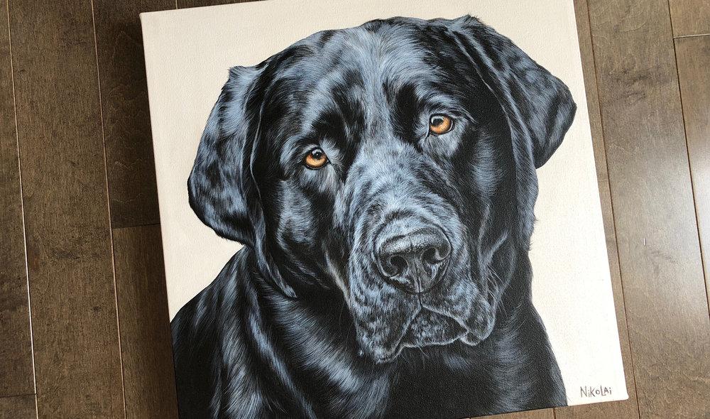 Benny (Black Labrador Retriever)