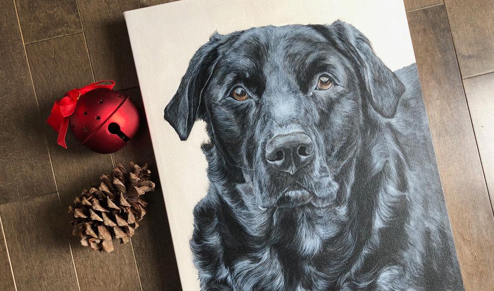 Mia (Black Labrador Retriever)