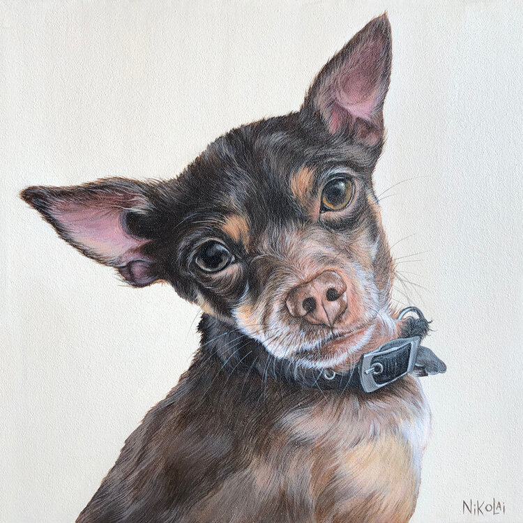 PONGO   |    Acrylic on gallery style canvas, 16 x 12  |  Winnipeg, MB  |  SOLD