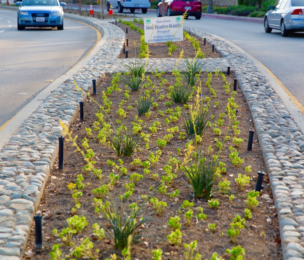 Orange Grove Median Landscape Project SPB re-landscaped over 6000 sq. ft. of medians on Orange Grove Avenue between Columbia and Grevalia Streets. The landscape was designed by SPB board member Anita Williams and offers a beautiful array of colors and textures using drought-tolerant plants. The landscape was installed in March 2016 with the help of TruGreen Landscape Contractors.