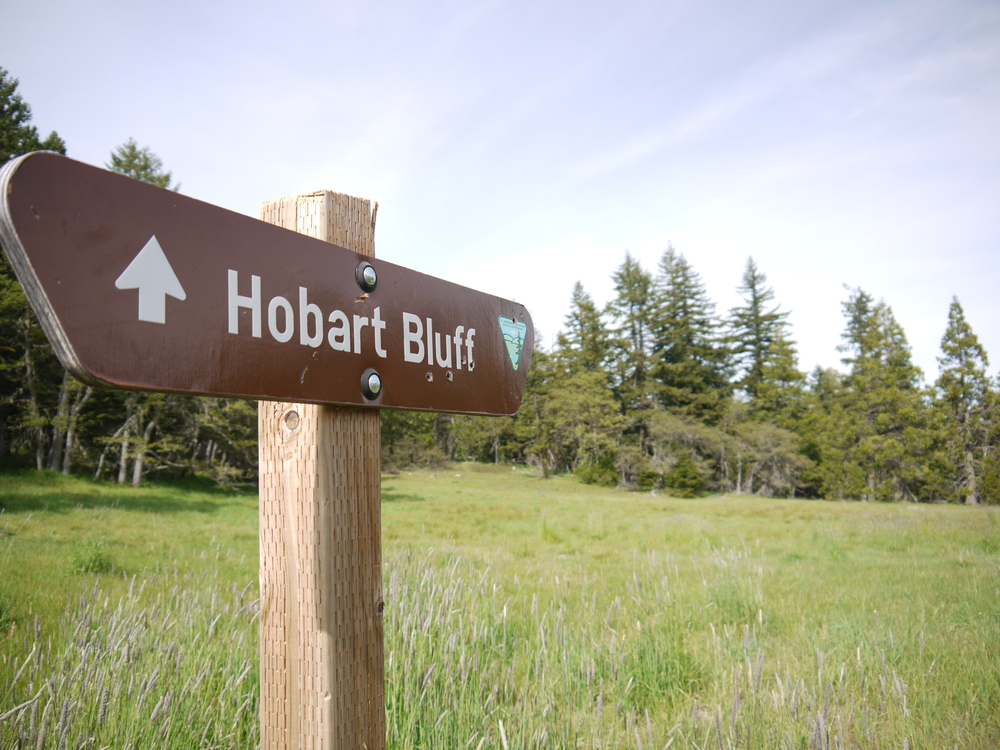 Along the PCT on Soda Mountain Road you will find the Hobart Bluff trailhead in a beautiful open meadow, home to the endangered Mardon Skipper.