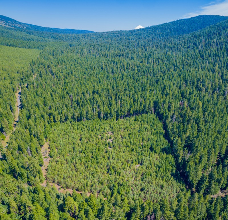 The Cascade-Siskiyou National Monument is a mixture of habitats; old mixed conifer forests, oak savanna, and plantation forests.  BLM Monument staff Ecologist Charles Shelz is piloting a project to restore the sterile and uniform plantation forest stands - we were glad to lend our support in this project! Aerial photo courtesy of Shane Stiles Photography