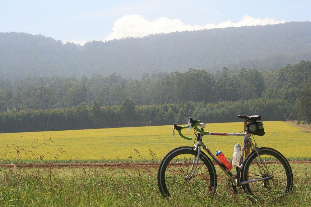 kinglake healesville cycling