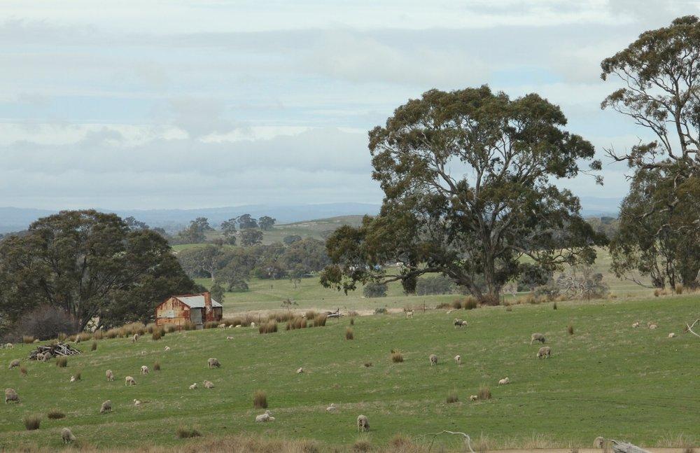 Goldfields track scenery