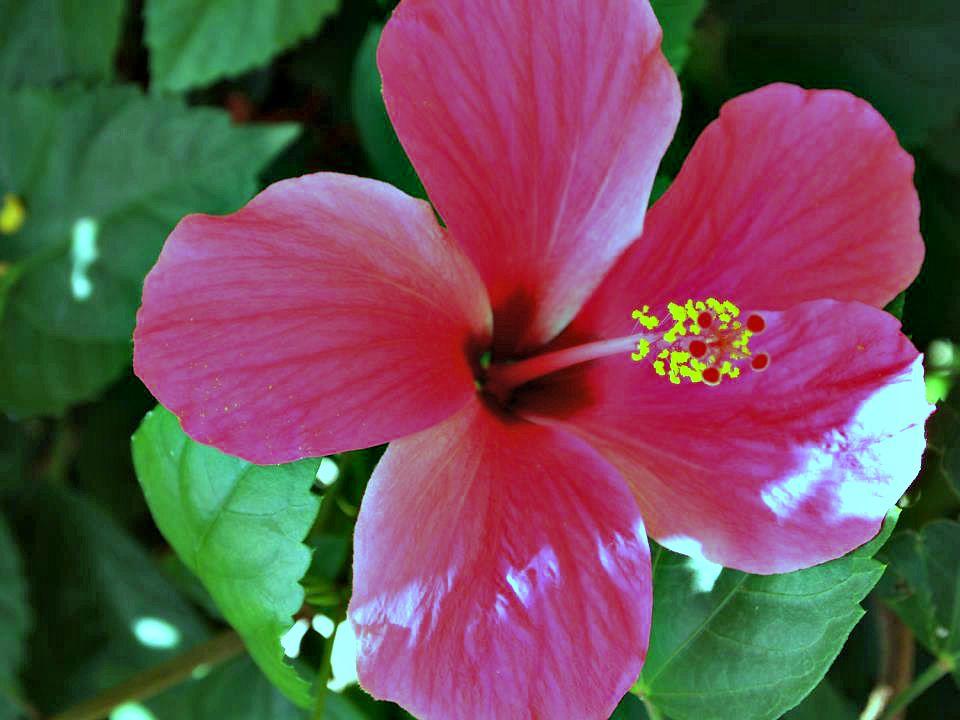 Hibiscus-House_10-720x494