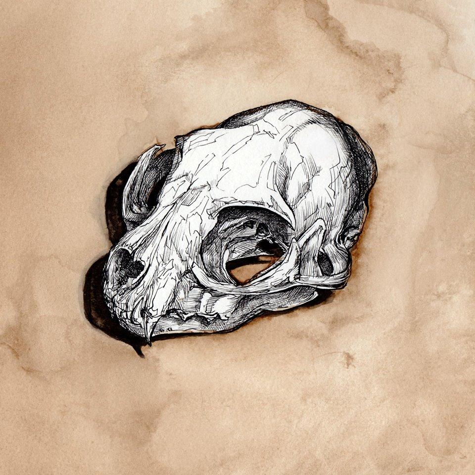BobcatSkull.jpg