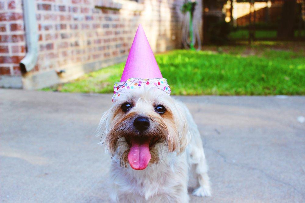 Happy dog using CBD