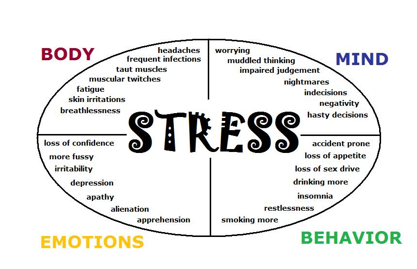 stress and negativity in our human minds Body stress effects all systems of the body including muscles, respiratory, cardiovascular, endocrine,  stress effects on the body musculoskeletal system.