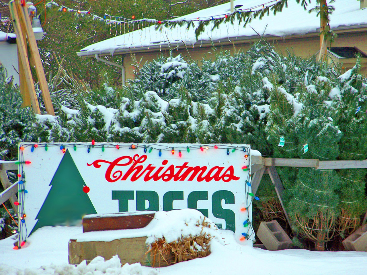 Why You'll Probably Be Paying More for Your Christmas Tree This Year