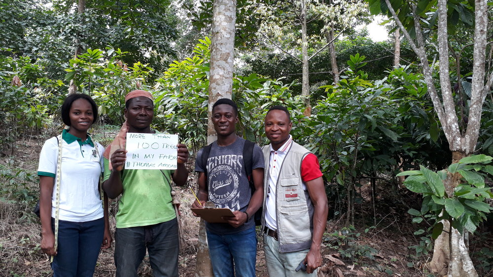 Farmers on a cocoa farm incorporating agroforestry principals. Photo courtesy of the World Cocoa Foundation.