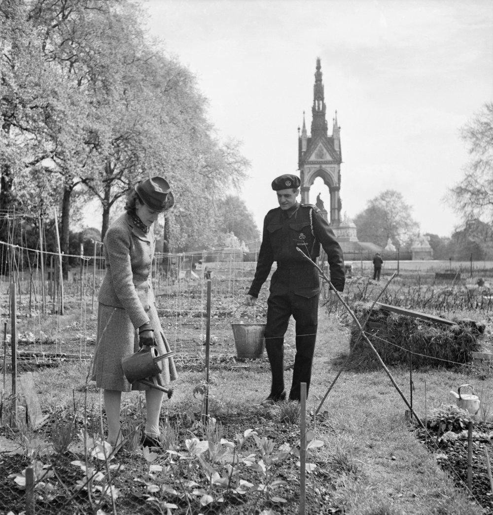 Allotments in Kensington Gardens, London, 1942. Photo via Wikimedia Commons.