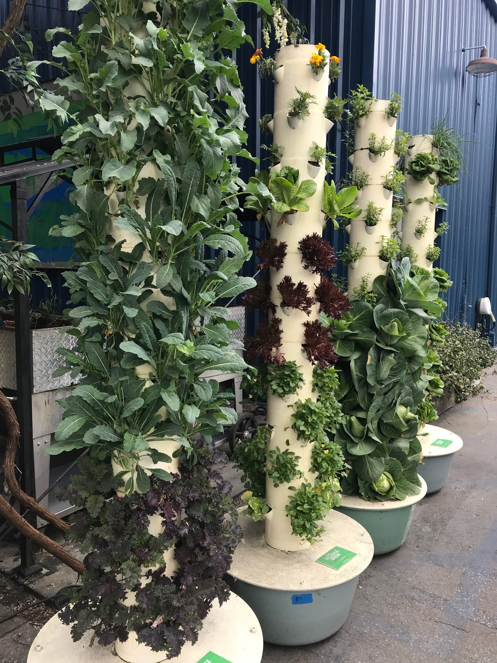 Hydroponics farms spotted in Los Angeles. Photo by Halley Sutton