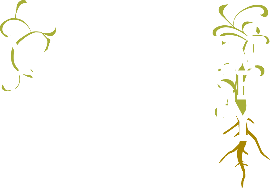 The Wisconsin Greenhouse Company