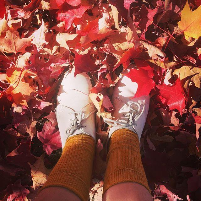 Obligatory fall photo 🍂🍁
