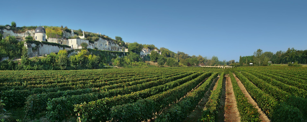 Loire - Vineyards.jpg