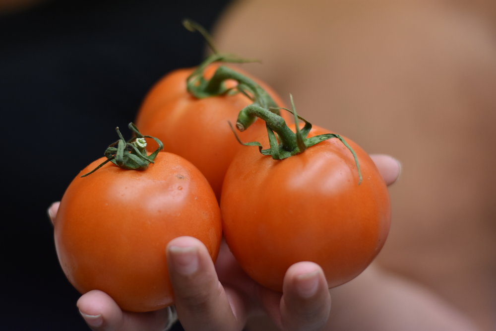 Imperfectly Perfect tomatoes!