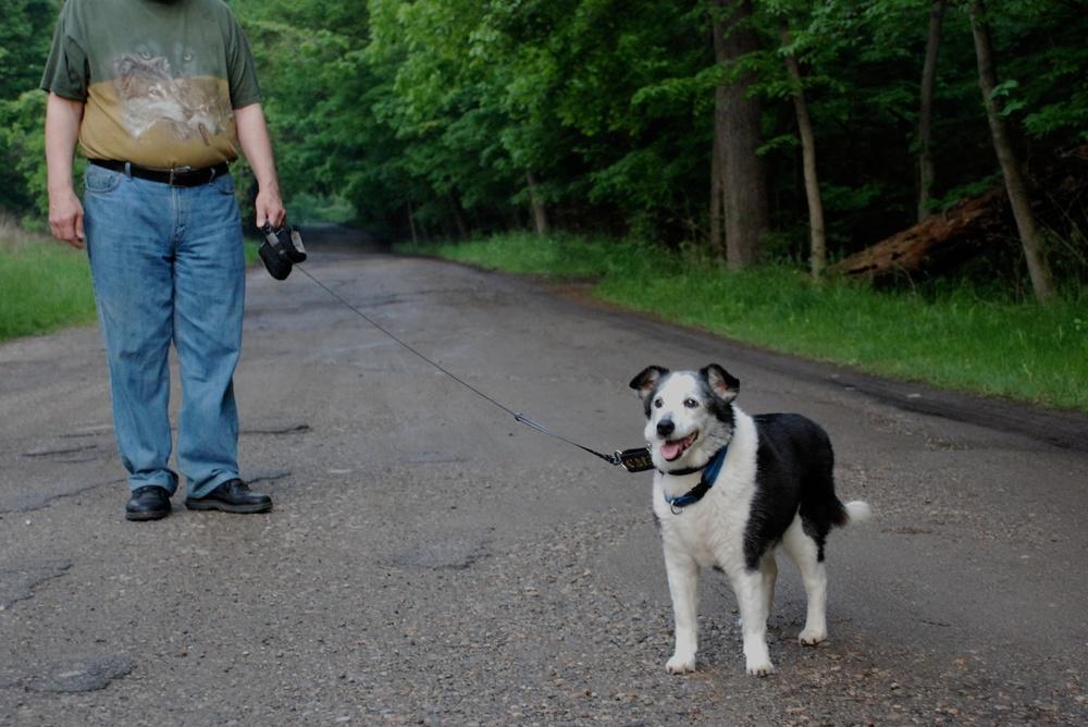 dog52211wolfsm_5826907323_o.jpg