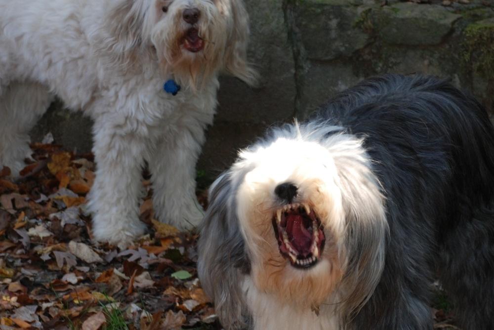 dogs103110sm_5364914091_o.jpg