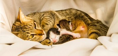 Mother cat with newborn kittens ©Getty images